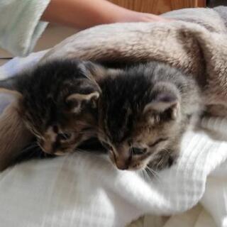 【決まりました】子猫2匹 元気です
