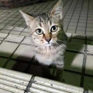 里親様決まりました✨ - 猫