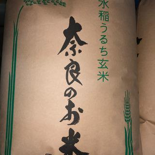 令和元年 新米 ヒノヒカリ(玄米) 一等米