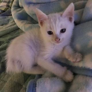 生後1か月と14日の子猫