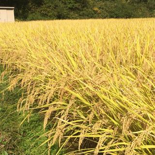 取れ立て新米 小野市産 ひのひかり 玄米 販売します。