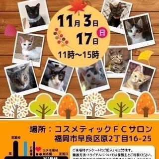 超甘えん坊のキジ君(11/3譲渡会) − 福岡県