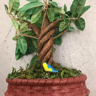 「田舎の樹」【未使用品】小鳥の声が聞こえる