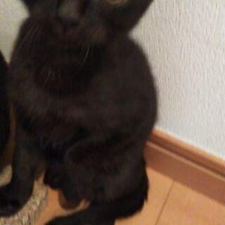 黒猫の里親さん募集します!