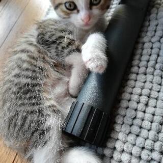 子猫と親猫★保護しました。