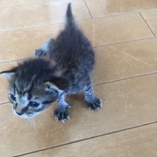 3匹兄弟の子猫たちを助けてあげたくて。