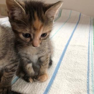 生後1ヶ月の子猫2匹です 【再募集】
