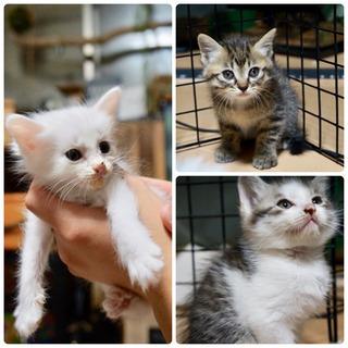 生後1ヶ月ほどの子猫達