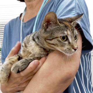 11月3日(日祝) 猫の譲渡会 名古屋市港区 港生涯学習センター...