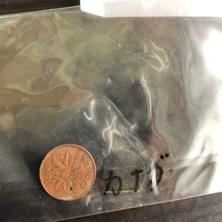 カナダ、インドネシア、香港、フィリピン硬貨