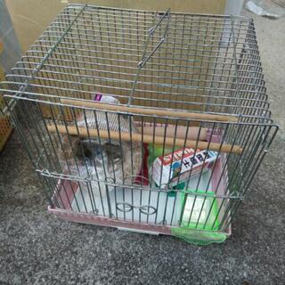 鳥かご 付属品付 小鳥 インコ 鳥籠 ゲージ