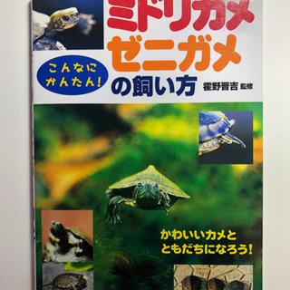 ミドリガメ・ゼニガメの飼い方