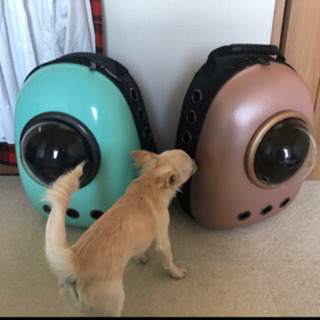 猫宇宙バッグ