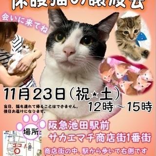 保護猫の譲渡会 大阪池田