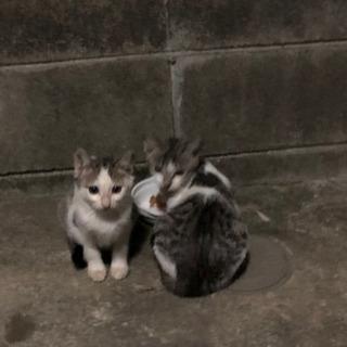 かわいい子猫4匹保護してください。の画像