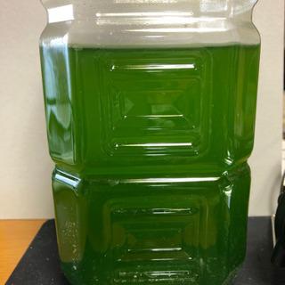 濃縮ミドリムシを培養したグリンウオーターの種水です。500mlです。