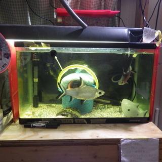 熱帯魚 数種まとめて