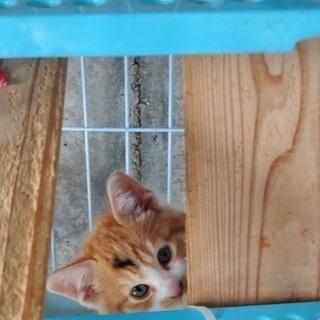 🆘保健所収容🐱子猫4兄妹🐱あと1匹だけになり寂しく家族を待っています【県外譲渡可】 - 猫