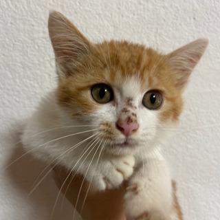 生後3か月のオス猫です
