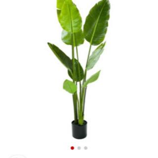ニトリ人口観葉植物