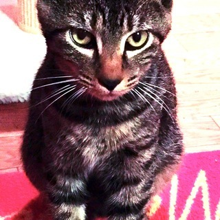 かわいい子猫たち❤️男の子女の子