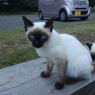 御池に捨てられた猫の里親を募集していますその1