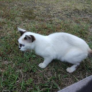 御池に捨てられた猫の里親を募集していますその2