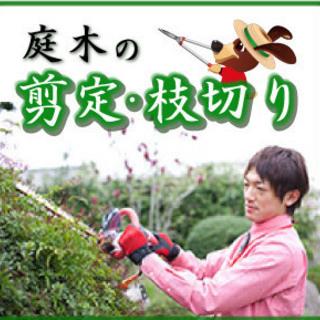 ★☆庭木の剪定・枝切り★☆見積もり無料