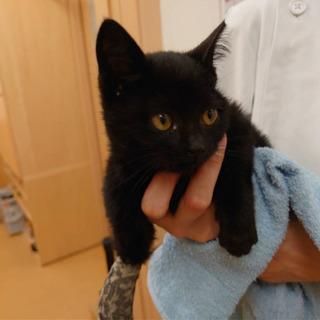 可愛い黒猫ちゃん