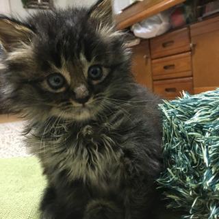 生後2ヶ月 オス猫