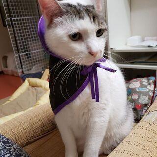 猫の譲渡会 明石 うみねこ プロジェクト