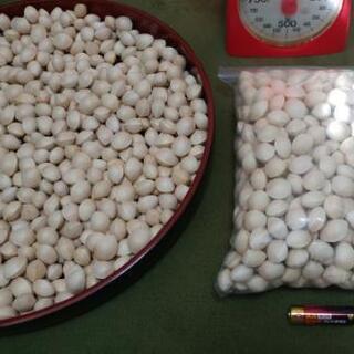 秋の味覚 ギンナン 銀杏 1kg