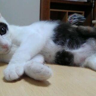 三毛らしい三毛猫ちゃんです。