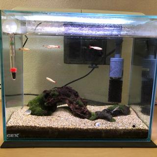 鑑賞魚 と設備一式 お譲りします。