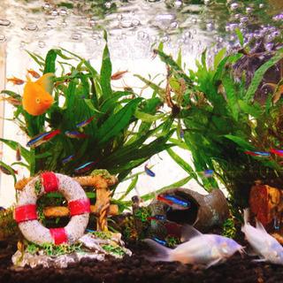 水槽付き 熱帯魚4匹