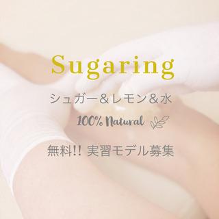 シュガーリング  モデル急募‼︎