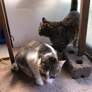 里親さんが決まりました。とっても 元気で可愛い 猫たち=^._.^=