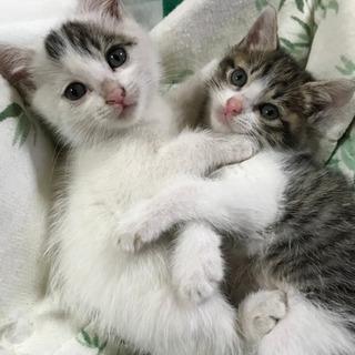 子猫の里親さんを募集しています。