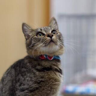 綺麗な子猫クリンちゃん