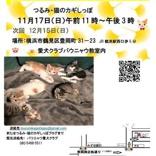 横浜 猫の譲渡会 つるみ・猫のカギしっぽ主催第64回(JR鶴見駅...