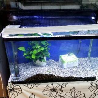 すぐに始められる熱帯魚水槽セット