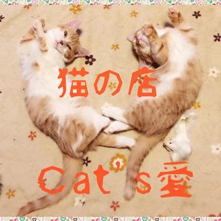 Cat's愛の仔猫情報です!