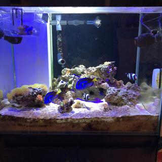 海水魚水槽生体込みフルセット