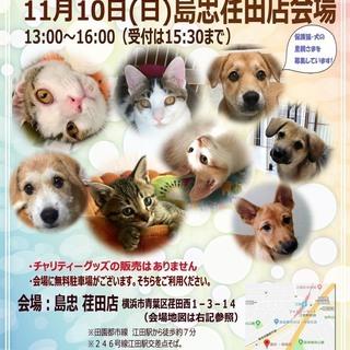 11/10(日)おーあみ避難所里親会 in 島忠 荏田店