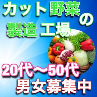 【No53】カット野菜機械オペレーター!20~50代男女募集中!...