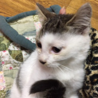 保護猫、三か月目くらい、メス