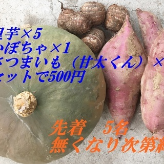 残り3名 甘太くん かぼちゃ 里芋の野菜セット ワンコイン