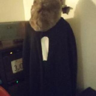 フェイクファベレー帽