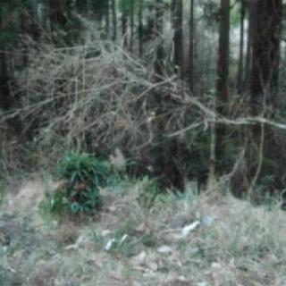 埼玉県の山間部で貸し出していただける山林を探しています。
