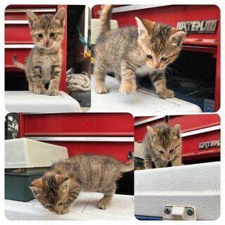 【里親募集】2ヶ月くらいの子猫